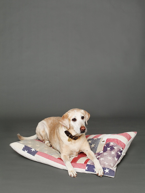 And Cake Vintage Flag Dog Bed $228