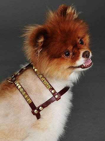 Paco Nix Studded Harness  $228