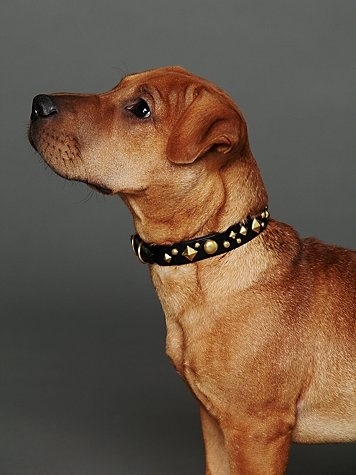 Paco Studded Leather Collar  $98