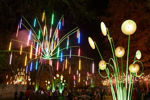 Garden of Light, TILT, Lumiere Durham 2015. Produced by Artichoke. Photo by Matthew Andrews.