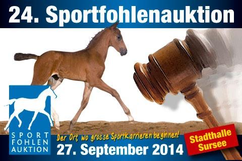 An der Sportfohlenauktion Sursee 2014 werden 50 junge Talente versteigert.