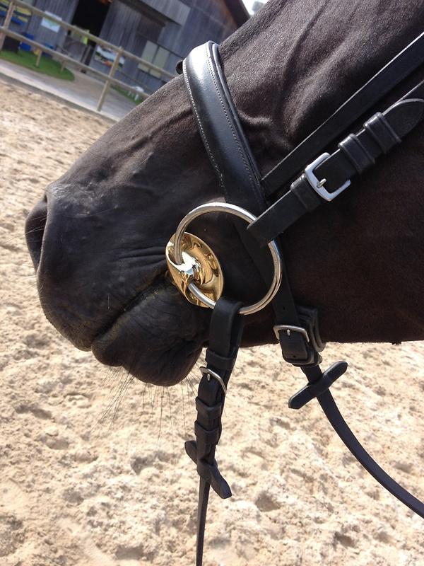 """Eine Neuentwicklung von Stübben STEELtec:  """"Golden Wings""""  - wird von jüngeren Pferden sofort und gern akzeptiert. (Bild: reitsport.ch)"""