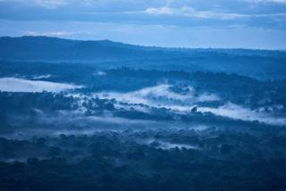 Blick von oben auf den Regenwald Kakamega