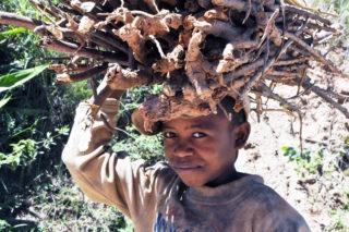 Kind mit gesammeltem Feuerholz