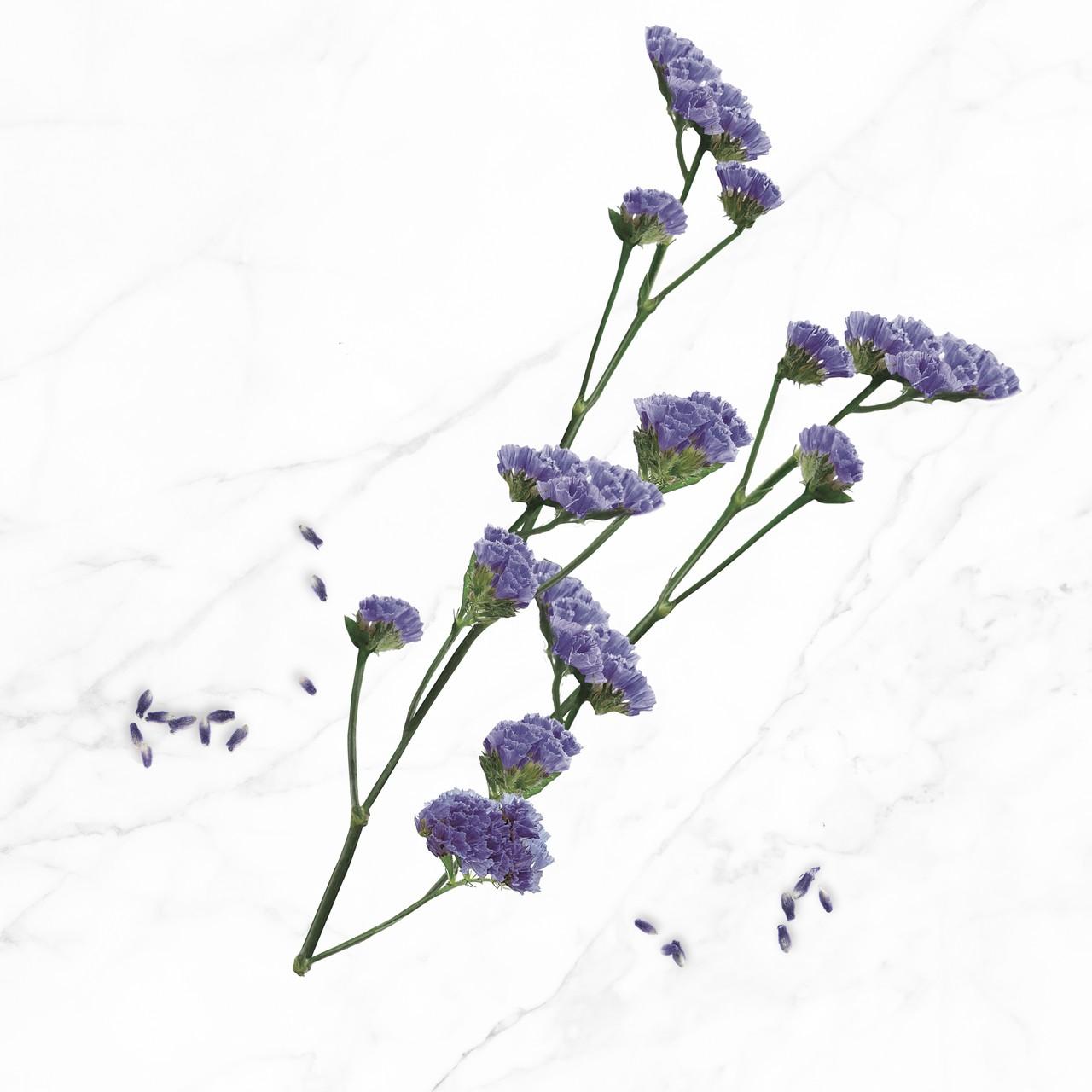 fleur-immortelle-bleue-nae-bio-ingrédients