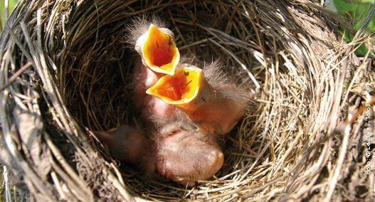 Brutstätten für Wildvögel