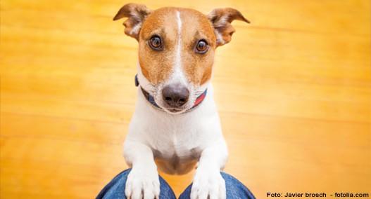 Hunden das Betteln abgewöhnen