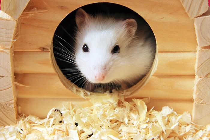 Einzugshilfe für Hamster