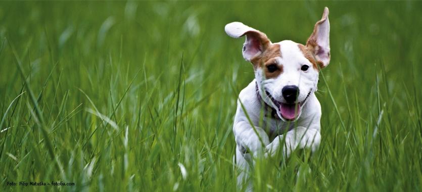 Zeckenschutz für Hunde
