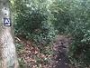 Der erste Eindruck beim Laufen im Wald