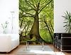 Fototapete Gigantischer Baum