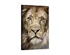 Glasbild Gesicht Löwe von vorn