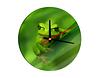 Glasuhr Grimmiger kleiner Frosch