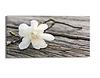 Leinwandbild Zarte Blüte