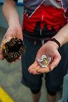 Münzen an den Zollstationen / Bild ©Red Bull Media House