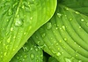 Taufrische Blätter in der Trendfarbe Greenery