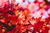 Unsere Fashion-Experten verraten, wie Sie trendiges Rot in allen Farbfacetten des Herbsts kombinieren. Foto: Jeremy Thomas
