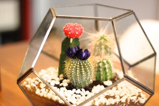 kakteen im terrarium