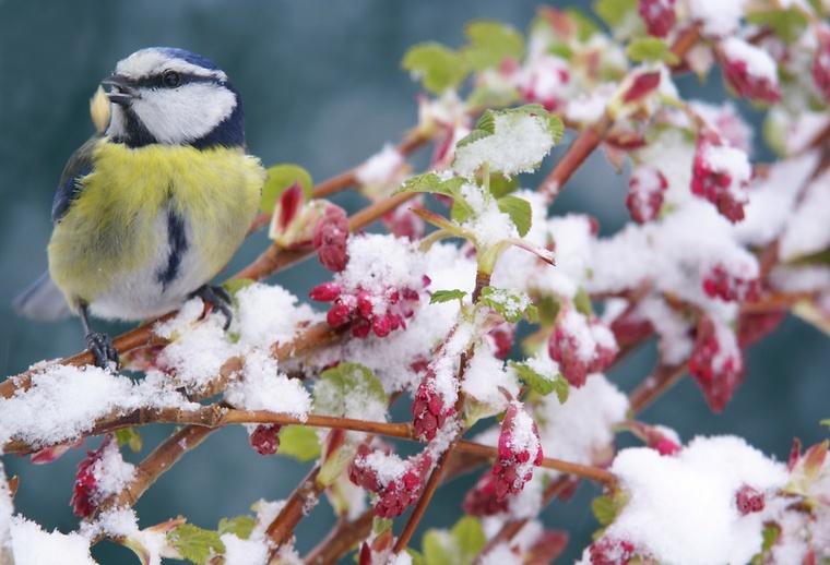 download gartentipps winter beachten | siteminsk, Garten und erstellen