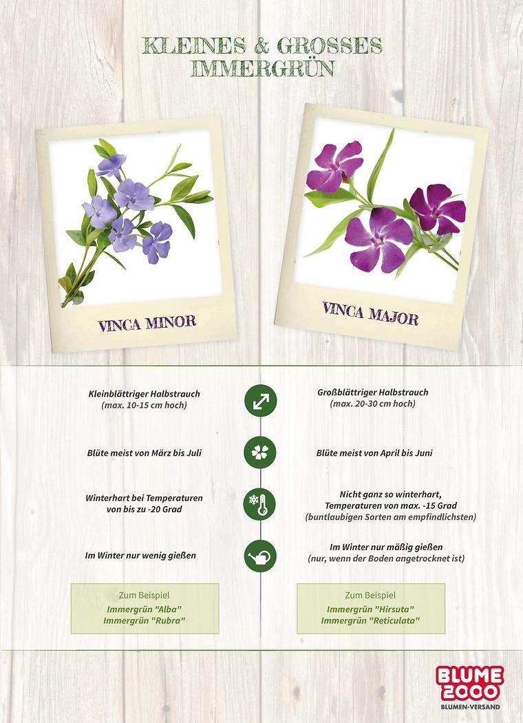 Immergrüne Gartenpflanzen: Tipps & Tricks | Blume2000.de Nelken Im Garten Pflanzen Arten Blumen Tipps