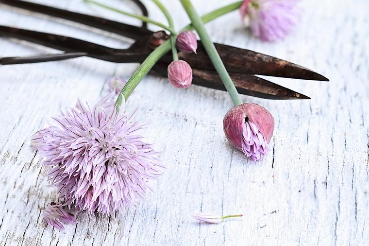 so-bleiben-schnittblumen-laenger-frisch -und-schoen-tipps-fuers-richtige-anschneiden-schnittblumen -richtig-anschneiden-blume2000-de_73187_38042, Garten und erstellen